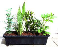 Harmonizar, limpar o ambiente, trazer bons fluídos, afastar energias negativas, trazer paz... São muitas as crenças que o vaso de sete ervas carrega e ajuda a promover. Se são comprováveis? ...