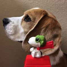 """Snoopy and #beagle!Hope you're doing well.From your friends at phoenix dog in home dog training""""k9katelynn"""" see more about Scottsdale dog training at k9katelynn.com! Pinterest with over 20,400 followers! Google plus with over 143,000 views! You tube with over 500 videos and 60,000 views!! LinkedIn over 9,200 associates! Proudly Serving the valley for 11 plus years!"""
