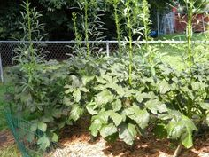 Its about time to start thinking about next year. Here are some reasons to grow a garden in the coming year!