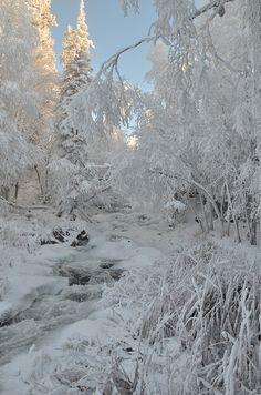 冬 雪 木 White all over at Cameron Falls by Jason Simpson** I Love Snow, I Love Winter, Winter White, Snow White, Foto Fun, Winter Magic, Winter Scenery, All Nature, Snow And Ice