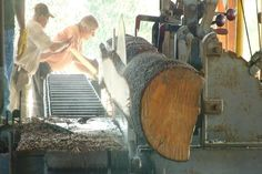 MTM On The Road: Antique-Flywheelers Student Harvest Days - Northern Michigan's News Leader