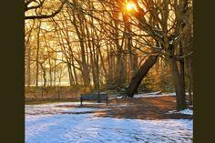 Winter Park by Ricochet on @creativemarket