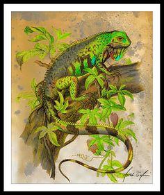 Green Iguana Art Print Poster Modern Wall Art by SouthShoreArt