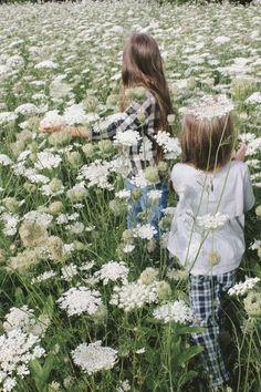 Queen Anne's Lace, field of flowers