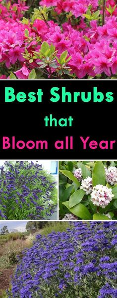 With careful planning and design, you could have your shrubs flowering in your garden all year long. These colorful flowering shrubs can be the focal points in your landscape and the foundation plants of your garden bringing all the wonders of nature Garden Shrubs, Lawn And Garden, Garden Tips, Shade Garden, Garden Web, Balcony Garden, Easy Garden, Cheap Garden Plants, Simple Garden Ideas