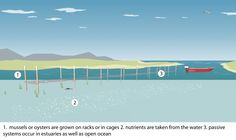 Open Aquaculture Systems: Sticks, ropes, racks and cages (passive feeding)