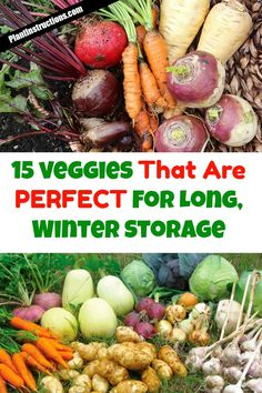 These 15 best storage crops hold up well during entire seasons and will save you a ton of money, not to mention they're just so much healthier because YOU grew them! Vegetable Garden Tips, Starting A Vegetable Garden, Veg Garden, Planting Vegetables, Edible Garden, Growing Vegetables, Regrow Vegetables, Vegetable Storage, Potager Garden