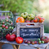 Heirloom Tomatoes Goin' Gorilla – Feels Good to be Home tomato recipes Roasted Tomato Sauce, Tomato Sauce Recipe, Roasted Tomatoes, Roasted Garlic, Green Tomatoes, Heirloom Tomatoes, Growing Tomatoes In Containers, Summer Tomato, Tomato Garden