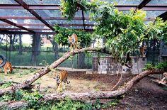 large cat enclosure - Google Search
