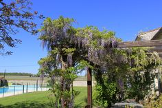 Wisteria Terrace at Font Remy, Mortagne Sur Gironde http://fontremy.com/TheHouses/Wisteria/tabid/64/Default.aspx