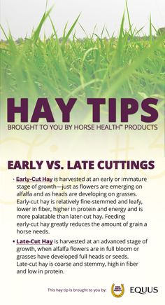 Do you know the difference between early and late maturity hay? A good understanding of the factors that affect hay production and what to look for when buying hay will help you select high quality hay that meets your horse's nutritional needs. And if all else fails, you can enter to win up to $10,000 worth of hay! >>http://bit.ly/EQ-Winter-Hay-Sweepstakes