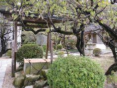 如水の井戸 太宰府天満宮 2013.10