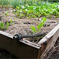 How To Irrigate Raised Garden Beds