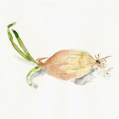 Onion, art print of my Origianl watercolor still life painting  of onion in natural shades, kitchen decor, cottage chic, limited edition. $21.00, via Etsy.