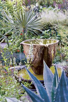 In the teacup garden this year at Chanticleer, the planting includes agaves, grasses, and palms.