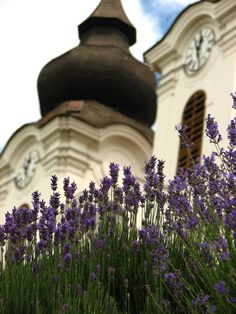 Tihany, Hungary  hungarianprovance.blogspot.com How Beautiful, Hungary, Budapest, Just Go, Countryside, Travelling, Lavender, Folk, Journey