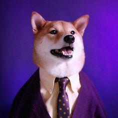 Cardi Gras Menswear Dog gets dashingly decadent in his favorite shade of Mardi Gras purple. Unique Dog Breeds, Rare Dog Breeds, Popular Dog Breeds, Shiba Inu, Menswear Dog, Dog Presents, Japanese Dogs, Guys Be Like, Grumpy Cat