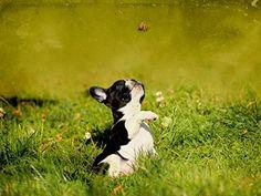 Spielender Bulldoggenwelpe 1000 Teile Puzzle quer: Amazon.de: Bürobedarf &…