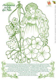 Coloriage Severine Aubepine Arbre Des Fees, page 30 sur 32 sur HugoLescargot.com
