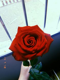 Tumblr Wallpaper, Flower Wallpaper, Iphone Wallpaper, Wallpapers Rosa, Wall Paint Inspiration, Every Rose, Beauty Hacks Video, Beauty Tips, Red Aesthetic