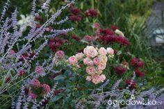 Madżenie ogrodnika... Kiedyś tu.... - strona 1991 - Forum ogrodnicze - Ogrodowisko