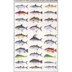 """Gamefish of the Saltwater Flats and Shallows"" poster"