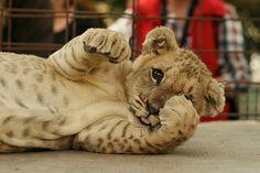 animais fofos tumblr - Pesquisa do Google