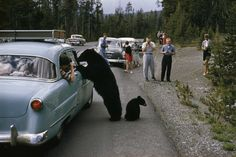 Yellowstone National Park, Wyoming, 1950 Christie's Boundless: 125 Years of National Geographic Photography