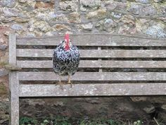 No doubt about the pecking order around here!