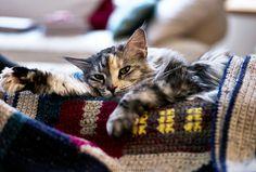 tamp0nz: penny soñoliento por nocklebeast en Flickr.