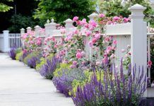 Flowers in front and through a white picket fence. Garden Spaces - traditional - landscape - other metro - dabah landscape designs. Garden Spaces, Garden Inspiration, Fence Landscaping, Beautiful Gardens, Dream Garden, Garden Shrubs, Front Yard Landscaping, Garden Design, Cottage Garden