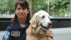 Bretagne (pronounced Brittany), believed to be the last surviving 9/11 Ground Zero search dog, was euthanized in Texas on Monday, June 7. She was 16 and her owner/handler, Denise Corliss, said old age had slowed her down. RIP, Bretagne. #HeroDog #GroundZero #SearchDog #Bretagne #TheNewBarker