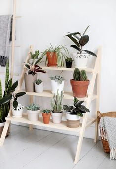Diy ladder plant stand living room diy in Plant Ladder, Diy Ladder, Ladder Shelves, Wooden Ladder, Diy Casa, Decoration Plante, Diy Decoration, Diy Plant Stand, Small Plant Stand