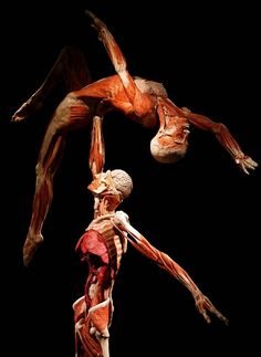 Body Worlds di Gunther Von Hagens  @ Fabbrica del Vapore – Milan   (October- February 2013)