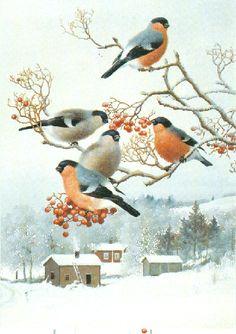 birds in snow Bird Illustration, Christmas Illustration, Illustrations, Bird Pictures, Pictures To Paint, Pretty Birds, Beautiful Birds, Vogel Gif, Motifs Animal