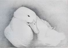 Silver Point - J. L. Fottrell Metal Drawing, Silverpoint, Bird, Drawings, Animals, Animales, Animaux, Birds, Sketches