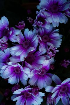 Winter flowers - Purple