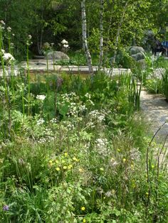 rhapsody in white - Daily Telegraph garden by Sarah Price - chelsea 2012