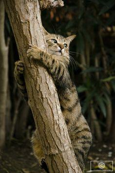 gatinhamel:  Feel like a koala by Yerco Bazaez