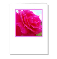 Valentines Rose greeting card shocking pink flower by NewCreatioNZ, $5.00