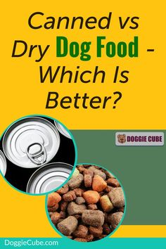 Canned vs dry dog food - Which is better? Before you decide on getting the best canned dog food or DIY some homemade dry dog food for your pet's diet, it's a good idea to compare both options. Canned Dog Food, Dry Dog Food, Dog Nutrition, Dog Diet, Dog Care Tips, Homemade Dog Food, Nutritious Meals, No Cook Meals, Dog Food Recipes