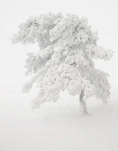 Winter *❄~*. Wishes & Dreams .*~❄*