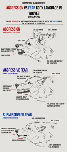 Agression vs Fear in Wolves cheat sheet: Snarls by KFCemployee.deviantart.com on @DeviantArt