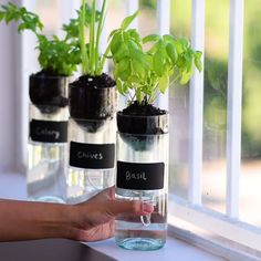 Check out these clever home gardening tips and tricks! growing plants Self Watering Planter