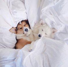 RICA Puppy Love