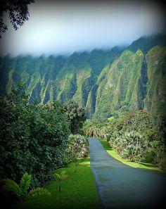 We used to camp here on school trips: Ho'omaluhia Botanical Garden.