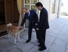 安倍晋三首相(右)をプーチン大統領とともに出迎える秋田犬「ゆめ」(ロシア・ソチ)