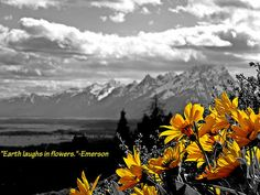Earth Laughs in Flowers by Dan Sproul  http://fineartamerica.com/featured/earth-laughs-in-flowers-dan-sproul.html