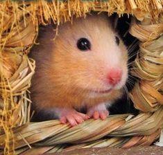 CINDERELLA Hamster Cage Theme!
