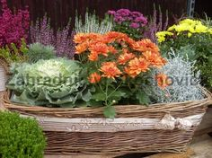 Fall Decor, Cabbage, Vegetables, Plants, Veggies, Vegetable Recipes, Cabbages, Plant, Collard Greens